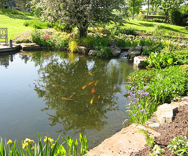 Large Pond Landscaping Natural Pools