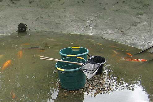 Draining a fish pond to allow fish removal  (© aquapic)