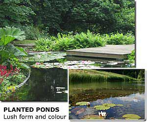 planted-pond with deck, planted lake (© aquapic)